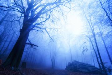 Kühle Stimmung im nebligen Wald