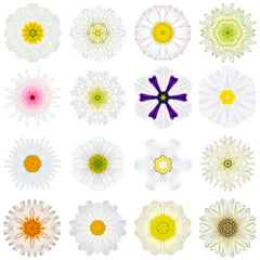 Collection Various White Concentric Flowers Isolated on White