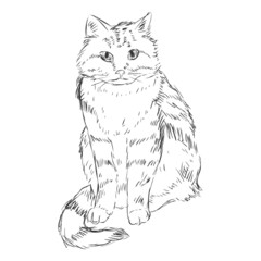 Vector Sketch Cat