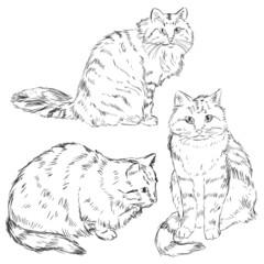 Vector Set of Sketch Cats