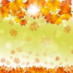 Autumn Yellow Leaves Bright Background