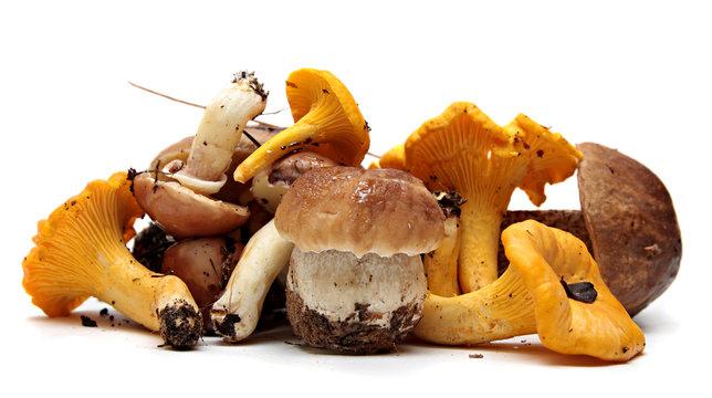 Boletus Edulis mushrooms over white background