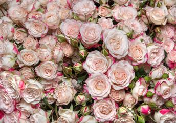 l white-pink roses
