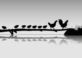 Horoz  Tavuk ve Civcivler ( siyah-beyaz )