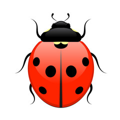 Ladybug isolated on white background. Vector illustration.