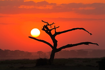 In de dag Baksteen Sunset with silhouetted tree, Amboseli National Park