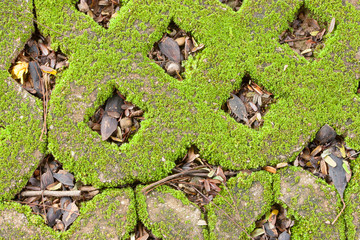 Closeup on Green Moss.