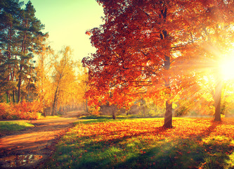 In de dag Herfst Autumn scene. Fall. Trees and leaves in sun light