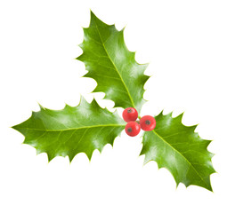 holly branch with berries