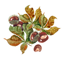 Chestnut fruits and leaves