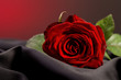 Red rose love gift