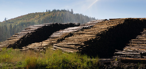 Large Timber Wood Log Lumber Processing Plant Logging Industry