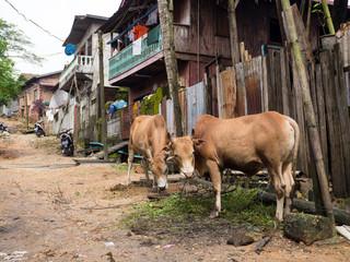 Village road in Myeik, Myanmar