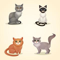 Cat set isolated