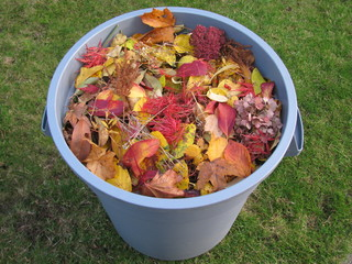 A plastic garbage bin full of yellow and read leaves