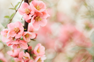 Nature in spring