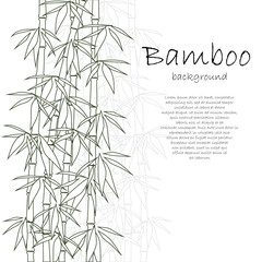 Wall Mural - Bamboo background white