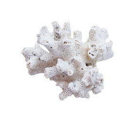 coral bleaching on white background