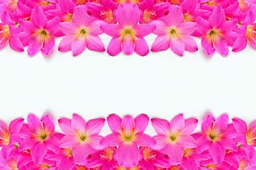 Wall Mural - Rain Lily