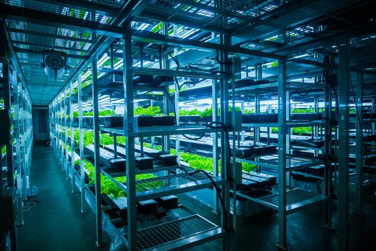 hydroponic system