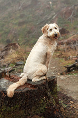 Dog Sitting on Tree Trunk