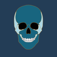 Vector illustration of colored skull