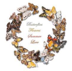 Butterflies. Wreath made of butterflies