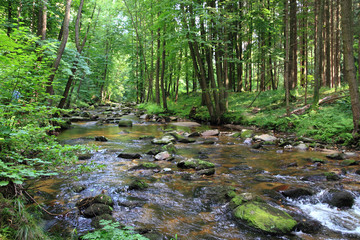 small river in the green forest