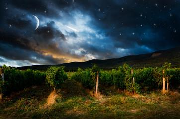 Grape field in the night