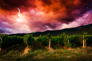 Grape field in the night