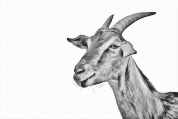Drawing goats, portrait