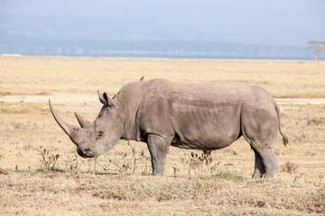 Foto auf Gartenposter Nashorn Rhino