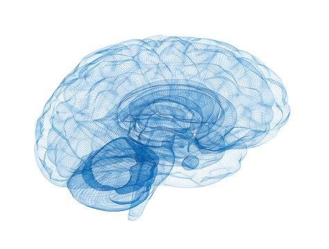 Brain wireframe model isolated on white background