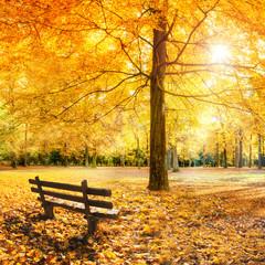 Wall Mural - Goldener Herbst im Wald