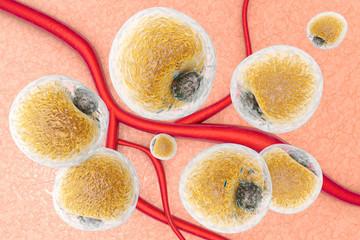 Fettzellen