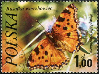 stamp printed in Poland shows butterfly Numphalis polychloros,