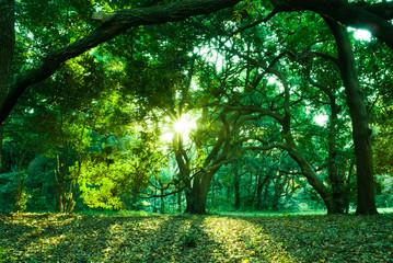 Fototapeten Wald 森林