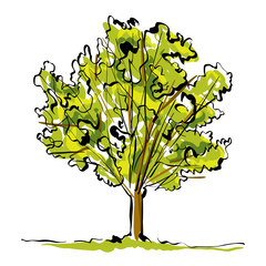 Green hand drawn tree on white background, simple illustration.