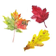 watercolor autumn leafs set