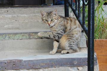 cat paw raised