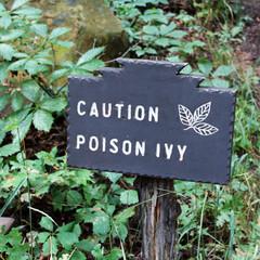 Mesa Verde National Park - Poison ivy