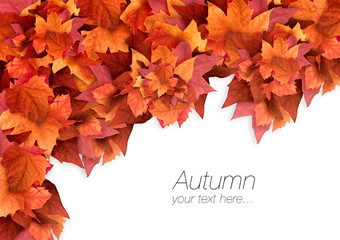 Autumn Leaves. Fall Background. Color Explosion