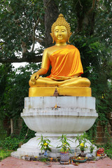 image of Buddha under the tree