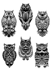 Tribal owl birds set