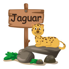 animal alphabet letter J for jaguar