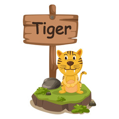animal alphabet letter T for tiger