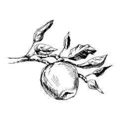 Hand drawing an apple. Vector illustration