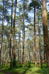 view of towering trees