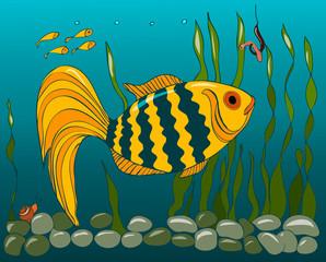 Orange fish in the water