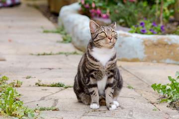 Tabby cat sat in garden
